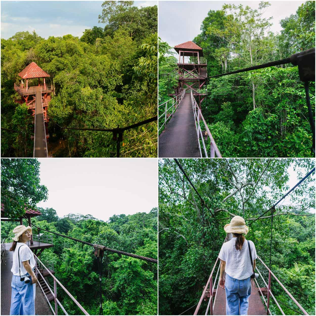 ปักหมุดเช็คอิน ทุ่งค่าย ให้ธรรมชาติดูแลคุณกับความสวยของต้นไม้และภูเขา ลมเย็นๆในยามเช้ากับสะพานที่ยาวสวยงาม